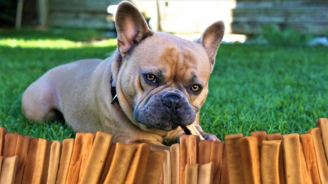 Dog chews sticks